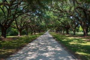 Boone Plantation Charleston-8435